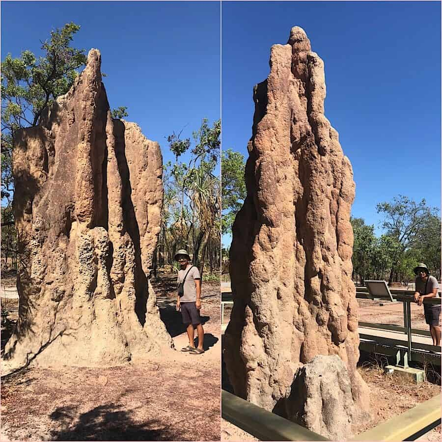 Tall cathedral termites mounds dwarfing Trin in Litchfield