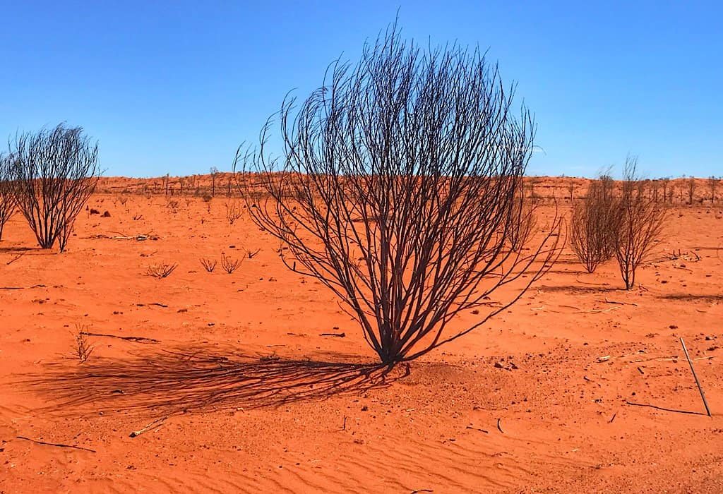 Red sand and burned out bush in the red center of Australia