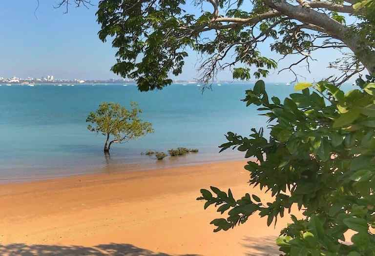 A mangrove tree in the bay. The city skyline of Darwin can be seen across the bay