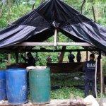 Retos de la sustitución de los cultivos de coca, marihuana y amapola en Colombia