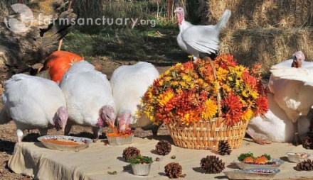 Farm Sanctuary's annual celebration for the turkeys.