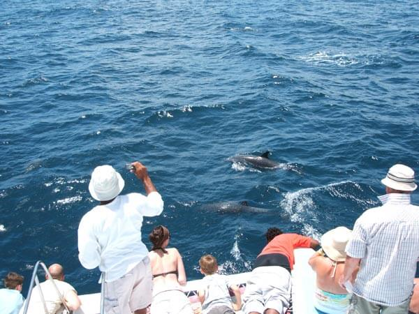 First Impression Dolphin tour