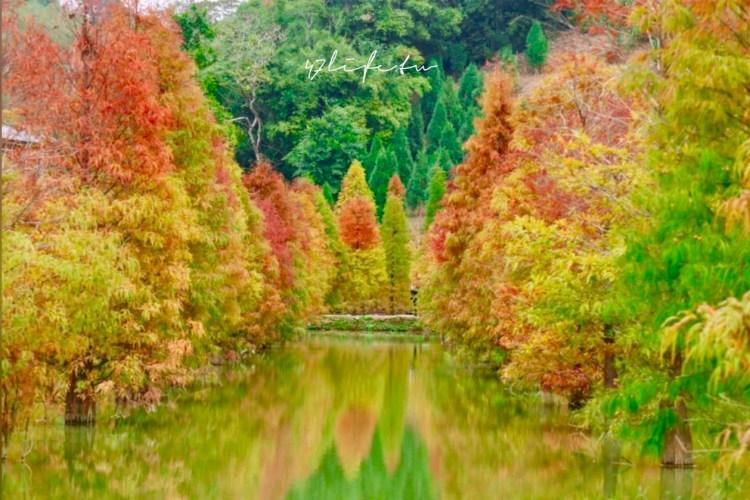 苗栗三灣落羽松秘境 免費落羽松景點 漸層落羽松配上湖水 像一座被調色的森林