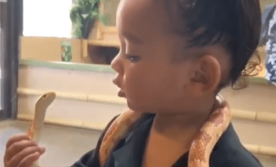 """My brave girl"" Kim Kardashian says as her youngest daughter Chicago plays with a live snake (video)"