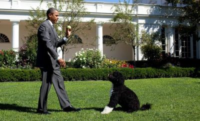 In this handout image provided by the White House, U.S. President Barack Obama throws a ball for Bo, the family dog, in the Rose Garden of the White House September 9, 2010 in Washington, DC