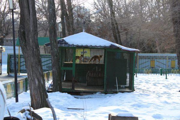 Лысенко сбежал с сессии горсовета в зоопарк: фото | 49000