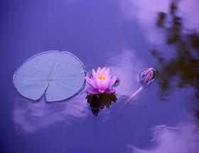 Mindfulness ' Bilinçli Farkındalık' Nedir? (1. Bölüm)