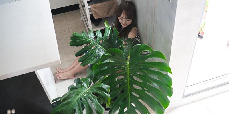 【園藝】植栽點綴~起手種植物,植物購入分享(一)