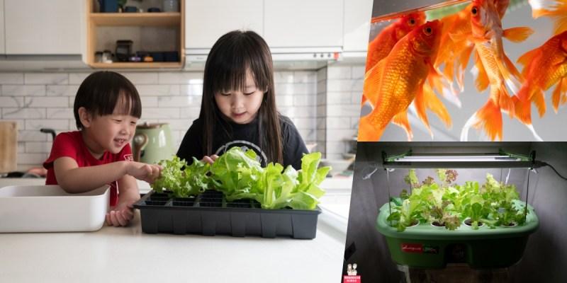 【魚菜共生】我家也有魚菜共生了!Lagoon 家庭魚菜共生,自己種菜自己吃,健康又方便!