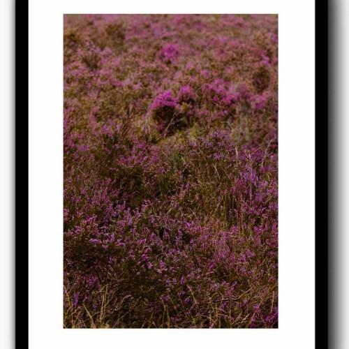 poster/print lavendelbloemen