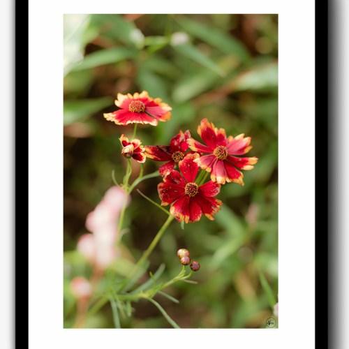 print red flower
