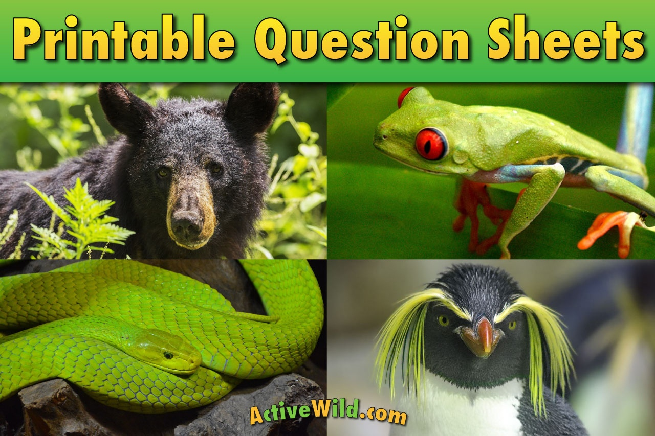 Mammals Reptiles Fish Insects Or Birds