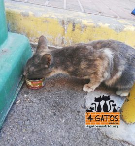 kara en la calle 4gatosmadrid.org
