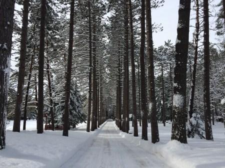 winter-large-8