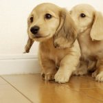 Cute Dogs HD Wallpapers