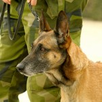 Military dog pictures