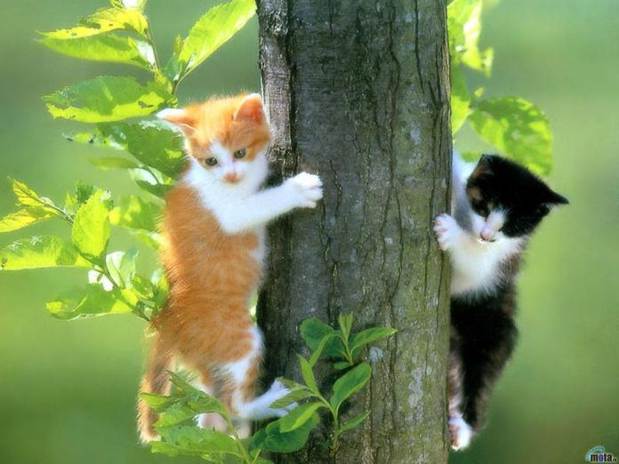 Two cat wallpapers hd