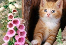 cats wallpapers new