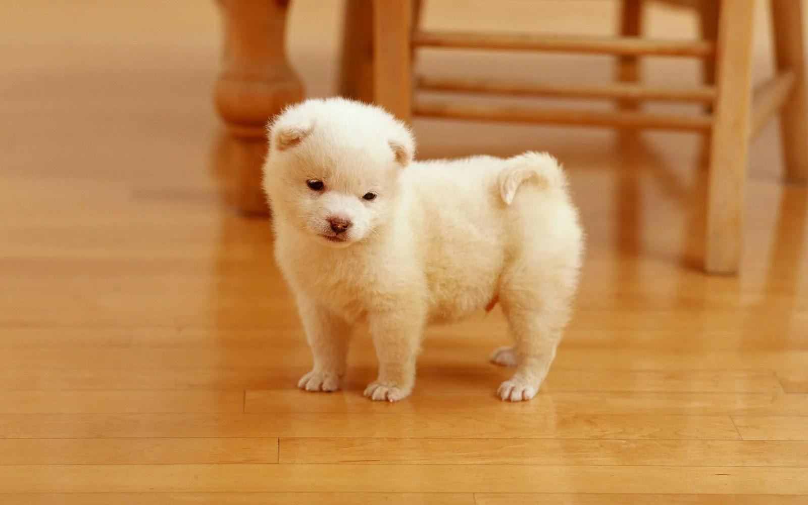 Popular Wallpaper High Resolution Dog - cutest_puppy-hd-wallpapers  Picture_378574.jpg