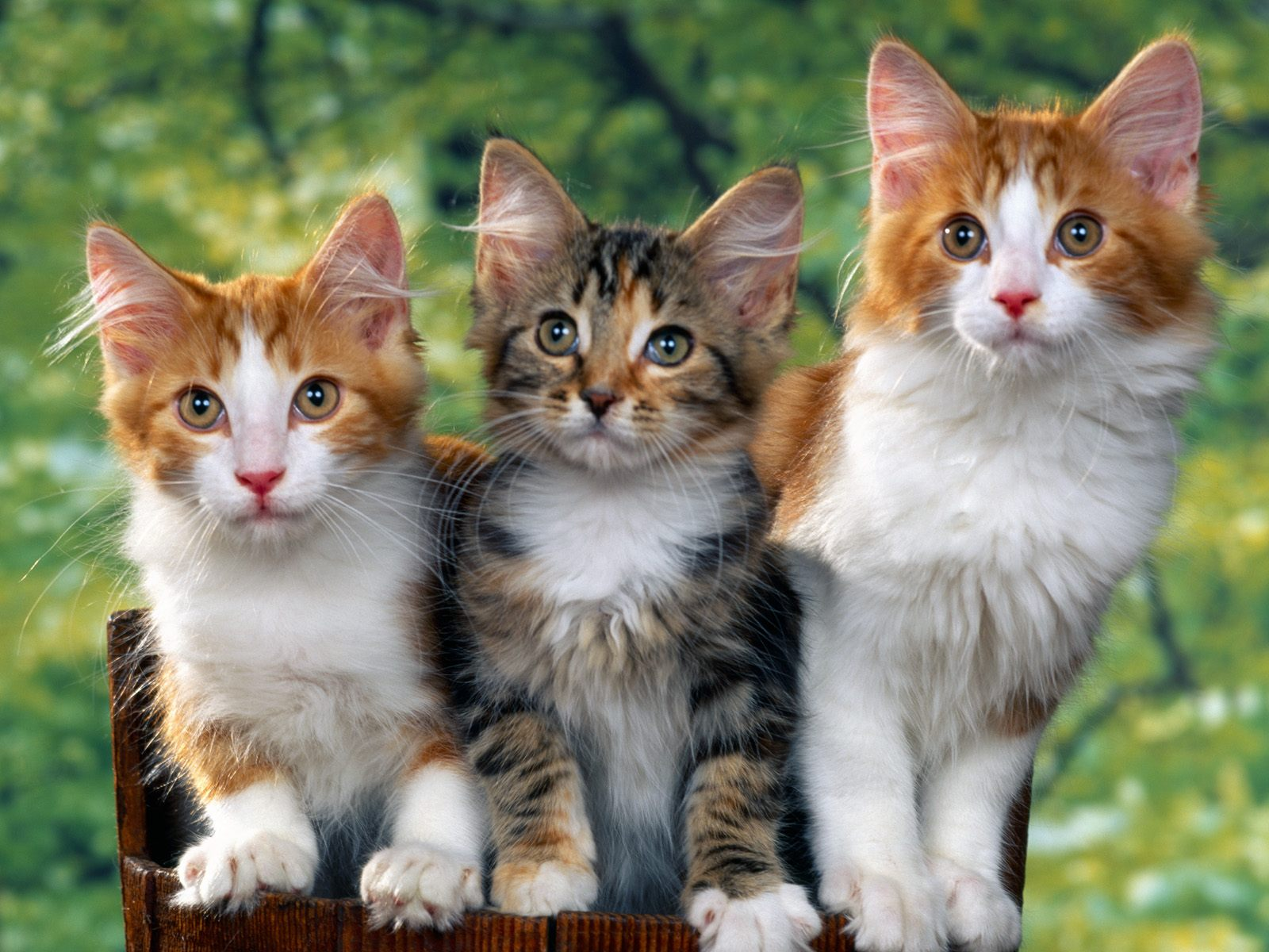 BEAUTIFUL CATS WALLPAPERS | Free Download HD Wallpapers