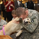military dogs wallpapers