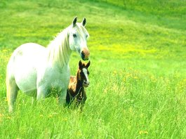 Animals Wallpapers Horses