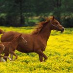 best Horses hd wallpapers