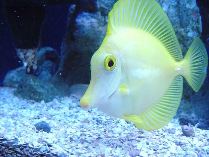fish desktop wallpaper hd