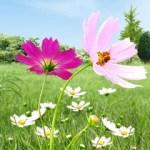 Beautiful flowers landscape