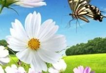 Wild Flower wallpaper
