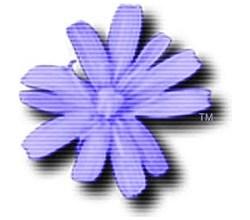 Cloanto C64 Forever Plus Edition Keygen Download