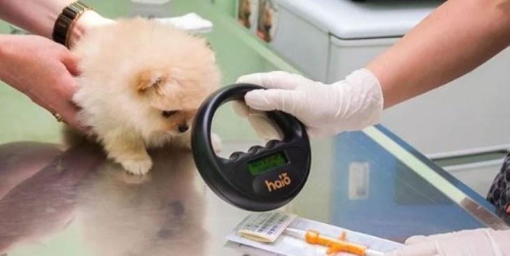Маркировка животных в России