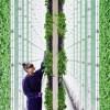 Вертикальные фермы Plenty