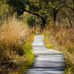 Forest Pathways 4K Free Wallpapers