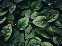 close-up-photography-of-leaves-with-droplets