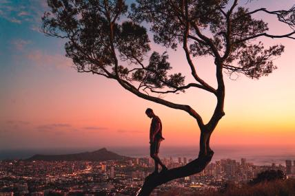 standing-on-tree-branch-during-sunset