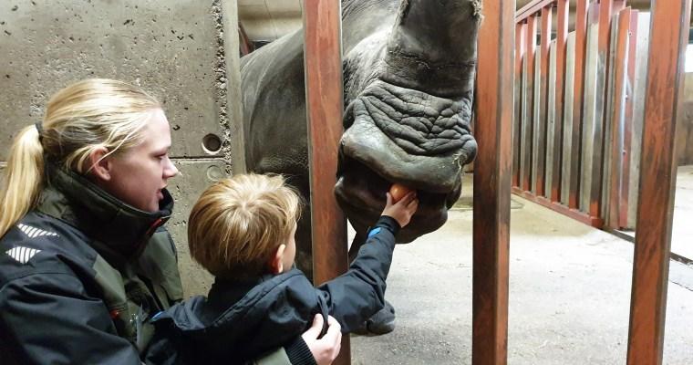 Wake Up Zoo: een bijzondere rondleiding in Givskud Zoo