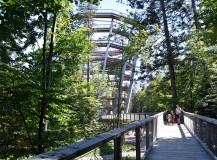 Het boomkroonpad in Bad Wildbad: lopen langs én over de toppen van het Zwarte Woud