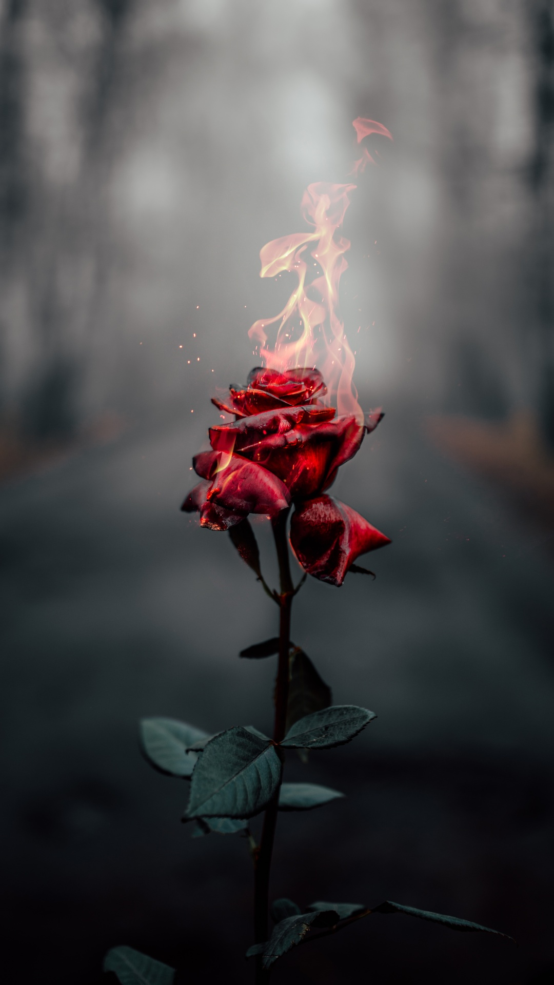 Grab the series 6 at $80 off we may earn a com. Rose flower 4K Wallpaper, Fire, Burning, Dark, Flowers, #464