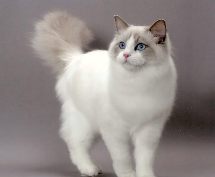 Plešatý dospievajúci mačička