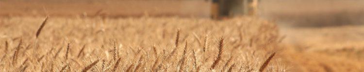 farming-agriculture-grain