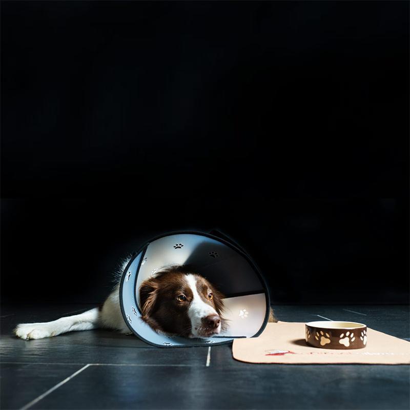 Hund liegend mit Pet Airs Halskrause von Animalsilver