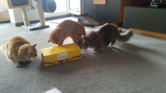 Sammy, Benny und Luna
