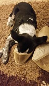 Mila ist hundemüde