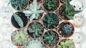 suclantsplants