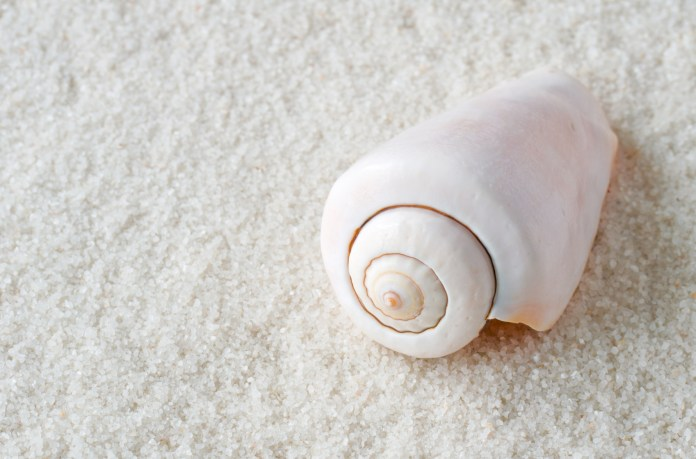 Kegelschnecke auf Sand