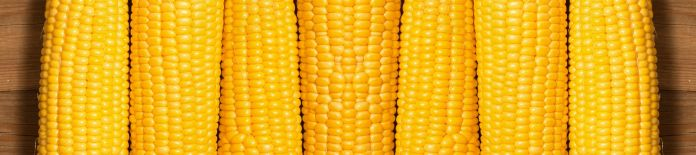 Gelber Mais