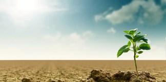 Trockene Erde mit einer Pflanze