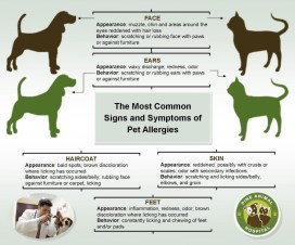 2_2-Most-Common-Signs-and-Symptoms-of-Pet-Allergies-1024x852