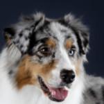 Profilbild von Darleen